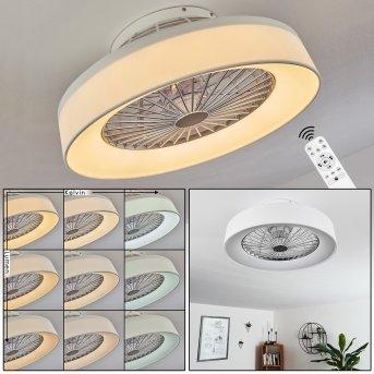 Ventilateur de plafond Moli LED Blanc, 1 lumière, Télécommandes